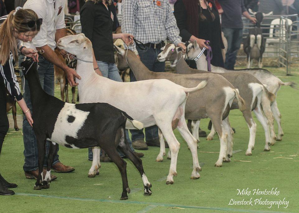 Dairy Goat Society of Australia Ltd